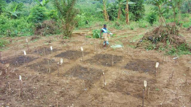 Consultant to Support Expansion of Rural Agricultural (Rice) Project 's activity photo