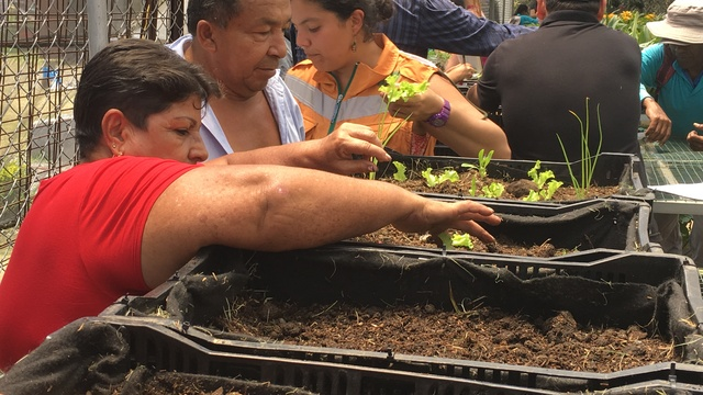 Learn social impact frameworks and use it for: urban agriculture