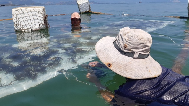 Digital marketeer for Seaweed farming startup's impact photo