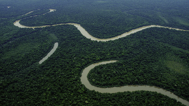 Fundraiser/Marketer to Protect the Amazon Rainforest's city photo