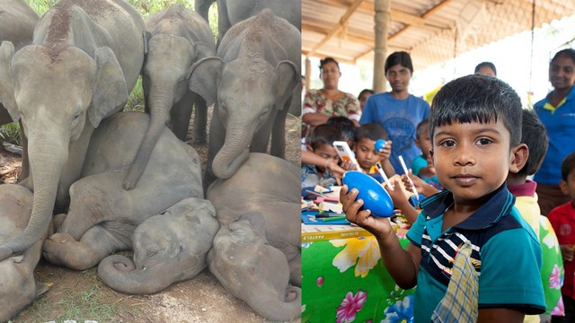 Learn social impact frameworks and use it for: Facilitating peaceful coexistence of elephants and people.