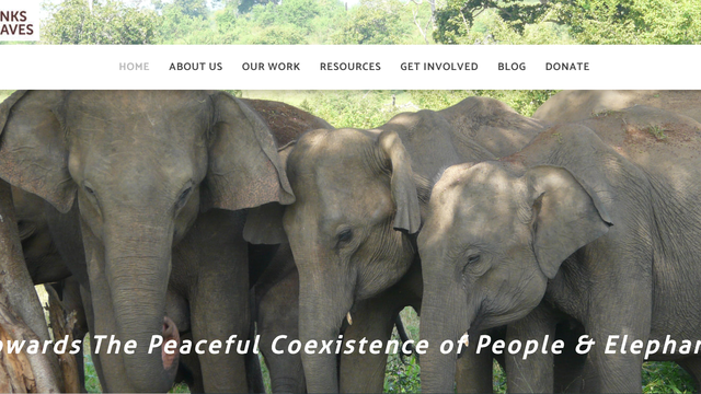 Website Customization To Increase Visibility Of A Wildlife Nonprofit's project photo